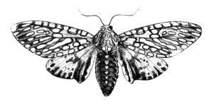 mollyjeanpoganski_Moth