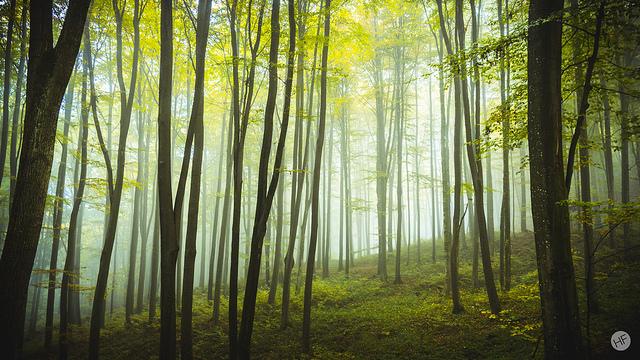 HannesFlo_Morning LightII